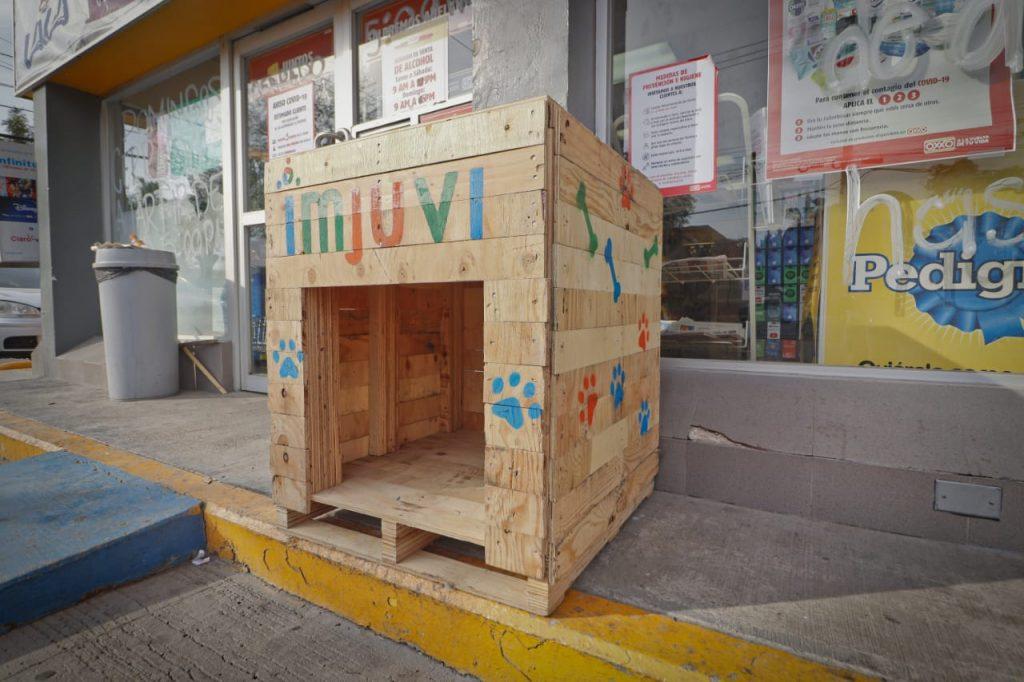 Ofrecen hogares para perros en situación de calle